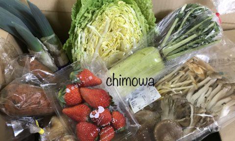 らでぃっしゅぼーやから届いたいちご、にんじん、大根、白菜、根しょうが(小松菜の代替品)、下仁田ねぎ、きのこセット(鍋用)の写真