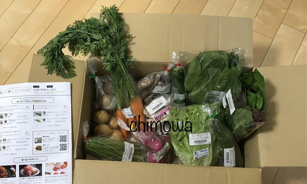 ココノミ初回の野菜12品の写真