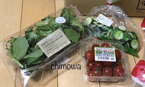 カット済み冷野菜(きゅうり)とマル野菜(ベビーリーフ、ミニトマト)の写真
